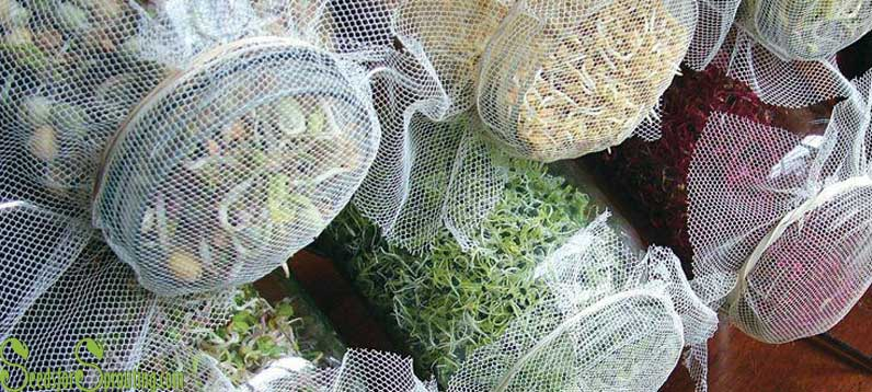 Sprouting Seeds – 4 Great Tips for Growing Sprouts