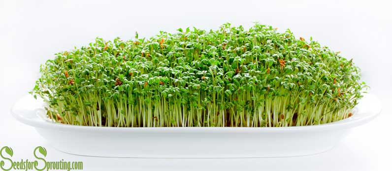 sprout seeds at home and save