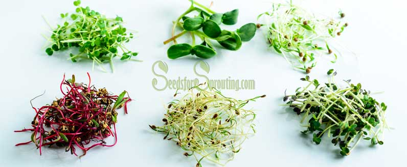 Benefits of Consuming Seeds for Sprouting